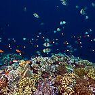 Reef edge by David Wachenfeld