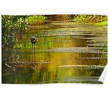 heron in the swamp Poster