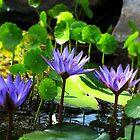 Blue water lilies by Irina777