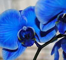 Bright Blue Orchids by Shaun  Gabrielli