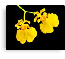 Twin Orchid Blooms Canvas Print