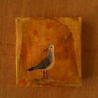 Lone Gull by urbanmonk