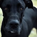 Great Dane by TeAnne