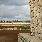 Stone Wall, Stony Fields, Malta by Jane McDougall