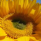 Sunflower -2 by photosbycecileb
