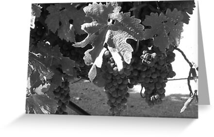 Napa Grapes in B&W by photosbycecileb