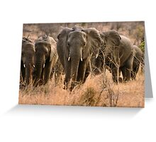 """""""For the love of elephants"""" - African elephant (Loxodonta africana) Greeting Card"""