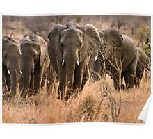 """""""For the love of elephants"""" - African elephant (Loxodonta africana) Poster"""