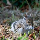 Baby Squirrel by JulesPi