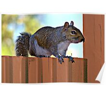 Sitting on the fence Poster