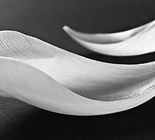 White abstract flower petals II by Nadja Drieling