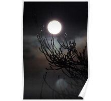 One shot,two moons and a Chinese Witch Hazel. Cornwall. Poster