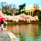 Cherry Blossoms in the Rain in Washington DC by KellyHeaton