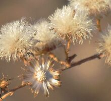 Winter Pom Poms by lorilee