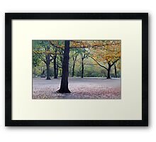 Old beech trees in autumnal park  Framed Print