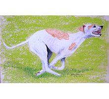 Greyhound running Photographic Print