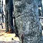 Bleeding Tree by Robyn Forbes