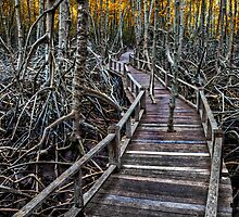 Mangroves by Adrian Evans