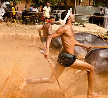 Close Finish at the bull race! by Neha Singh