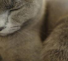 Grey by Anne Staub