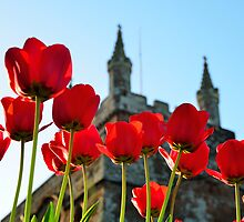 Tower, Tulips and Turrets by jonshort58