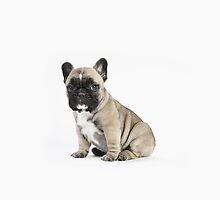 Pedigree French Bulldog Puppy - iPhone by Andrew Bret Wallis