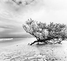 low key beach study by james smith