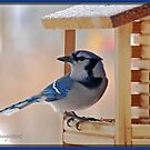 Blue Jay at the Feeder by Diane Blastorah