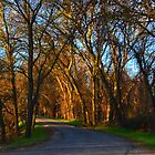 Northern California Anderson River Park Road by djmartinusen