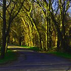 Anderson River Park sunlit road by djmartinusen
