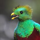 Resplendent Quetzal Portrait by naturalnomad