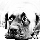 Bull Mastiff by Marcia Rubin
