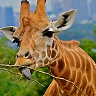 Giraffe Snacks / Refreshments ???. by Julie  White