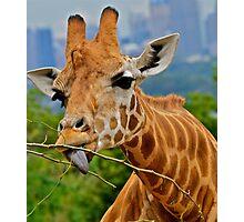 Giraffe Snacks / Refreshments ???. Photographic Print