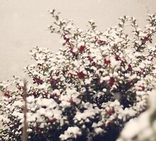 Snow and Holly  by KendraJKantor