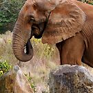 Elephant by Lolabud
