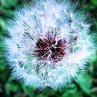 Flower by ruralguerre