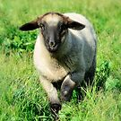 Baby Ewe by Saija  Lehtonen