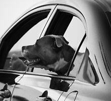 Drive By by Noel Elliot