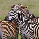 You scratch my back ....... by John Dalkin
