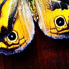 Butterfly Wings with Contrast by Erica Corr