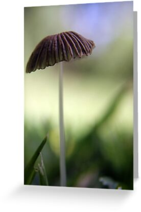 "Critters's Umbrella ""Pleated Inkcap"" (Coprinus plicatilis) by Qnita"