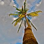 Beach Palm by bamorris
