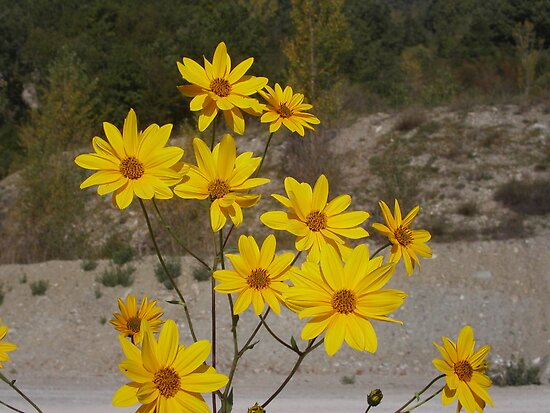 fiori gialli per te.....yellow flowers for you...my beloved Anna ! .adorata Anna sei solo  tu....annamaria.  1400 visualizzaz a gennaio 2013..FEATURED RB EXPLORE 15 GENNAIO 2012-- by Guendalyn
