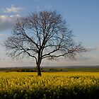 Lonely Tree by Moey