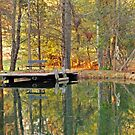 The Pond by Robin Lee