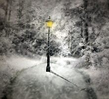 This way to Narnia by Cat Perkinton