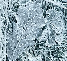 Frosty 1 - iPhone by Andrew Bret Wallis