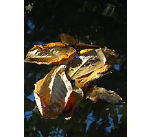 Leaves - Hojas Photographic Print