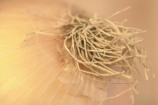 Yellow Onion Root Hairs by Robert Armendariz